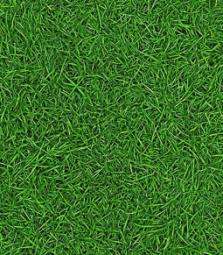 Линолеум Бытовой IVC Bingo Style Grass 25 2.5 м рулон